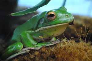 Frogs and Friends @ Virginia Living Museum | Newport News | Virginia | United States