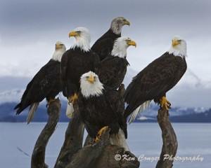 Wildlife Photography 101 @ Virginia Living Museum | Newport News | Virginia | United States