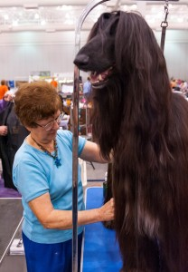 Virginia Memorial Day Cluster All-Breed Dog Show @ Hampton Roads Convention Center  | Hampton | Virginia | United States