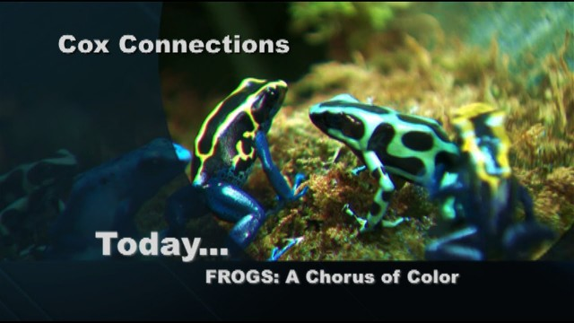 Frogs: A Chorus of Color – Virginia Living Museum – Connections 805 Segment A