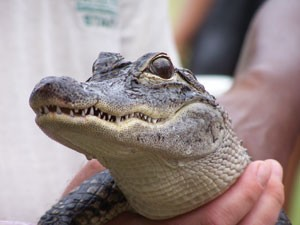 Reptiles Bizarre and Beautiful @ Virginia Living Museum | Newport News | Virginia | United States