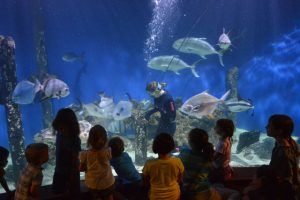 World Oceans Day @ Virginia Living Museum | Newport News | Virginia | United States